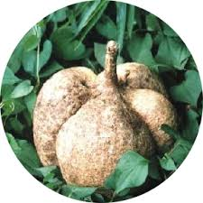 Taking Pueraria Mirifica While On Birth Control