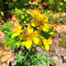 Can You Take Zoloft With St. John's Wort?
