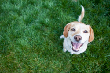 Is Benadryl For Dogs Different Than Benadryl For Humans?