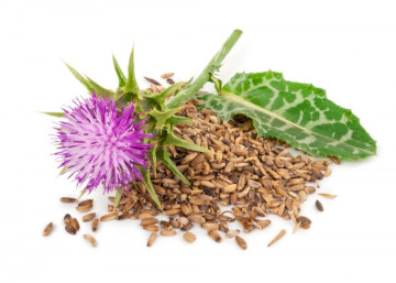 Taking Benadryl With Milk Thistle