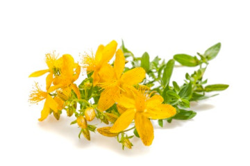 Does St. John's Wort Increase Heart Rate Or Chance Of Arrhythmias?