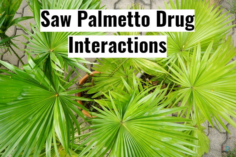 Saw Palmetto Drug Interactions