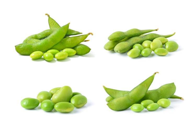 Soy Bean Title