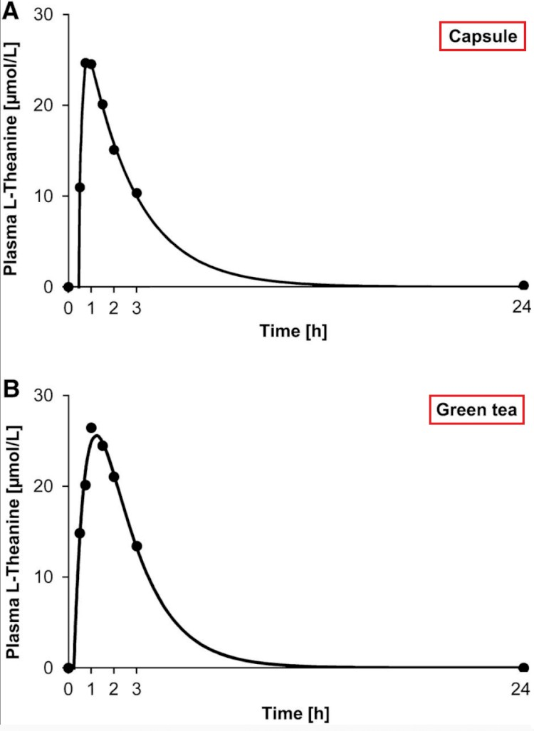 L-Theanine Concentration Over Time