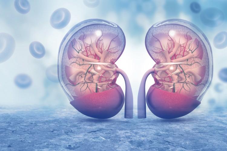 Kidney Title